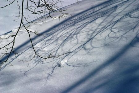 the shadow of branch on the snow photo