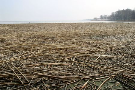 copse: Baltic coastline in spring Stock Photo