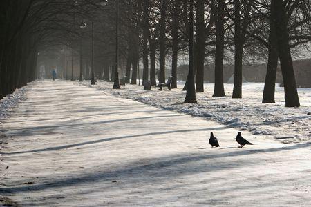 shadows on snow in park photo