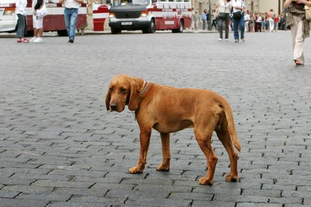 lonely dog Stock Photo - 4650067