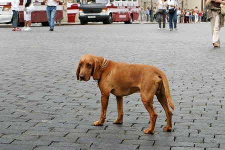 lonely dog photo