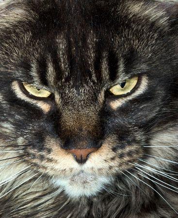 sullenly: cat snout