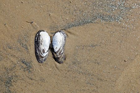 pair of sea shells