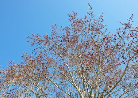 branches on sky background (1)