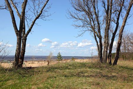 trees on coastline Stock Photo