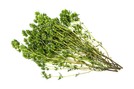 bunch of thyme twigs isolated on white background. Archivio Fotografico