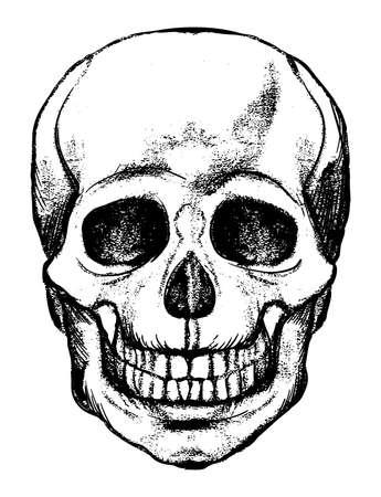 Human Skull, skeleton head anatomy ink hand drawn engraving etching line art stock vector vintage illustration