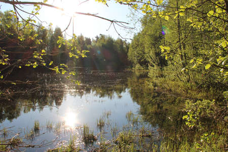 Spring day, the sun is shining, forest lake photo