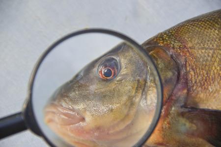 sulk: to sulk fish