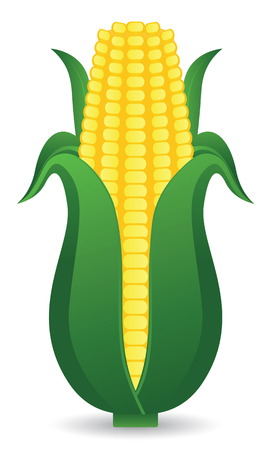 Corn  Vector illustration  Vector