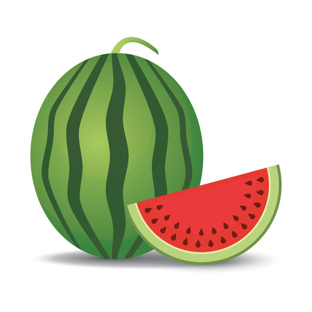 Watermelon and slice  Vector illustration Vector