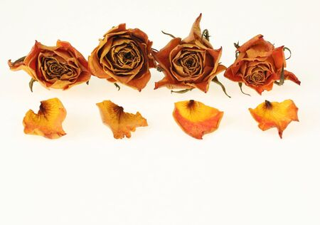 Dry roses - retro vintage background photo