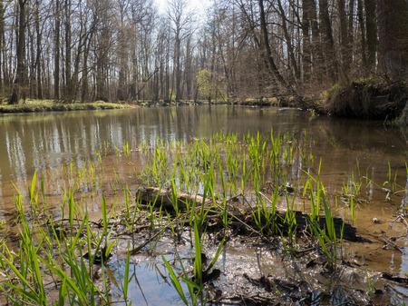 River in spring forest in Litovelske pomoravi on sunny day, Czech Repbublic Stock Photo