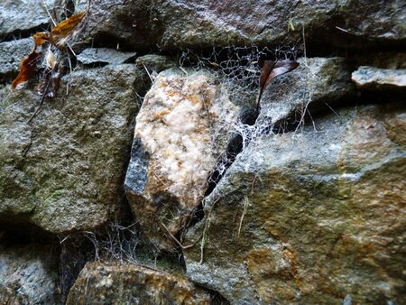 Old stone wall with cobwebs. Stock Photo