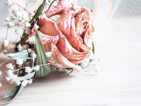 Romantic background with dry flowers on a white