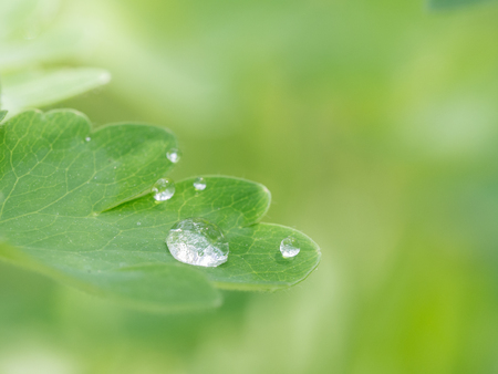 Beautiful background with greed leaf and water drop
