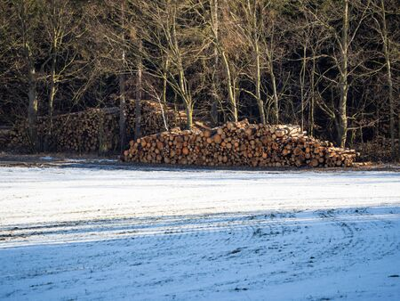 Pile of wooden logs stacked up in the wood in winter with snow, ready for wooden industry after bark beetle calamity Фото со стока
