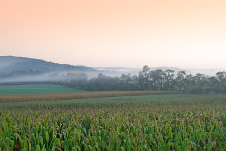 A foggy sunrise on a cornfield in Juniata County,Pennsylvania. Stock Photo