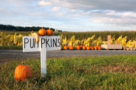 Pumpkins for sale along a country road