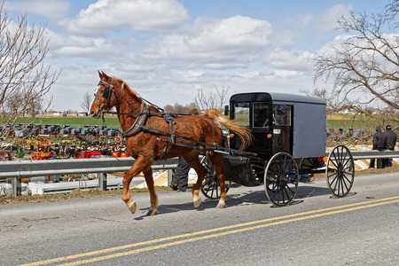 An Amish horse and carriage drives by a benefit auction (Amish mud sale) in Lancaster County, Pennsylvania.