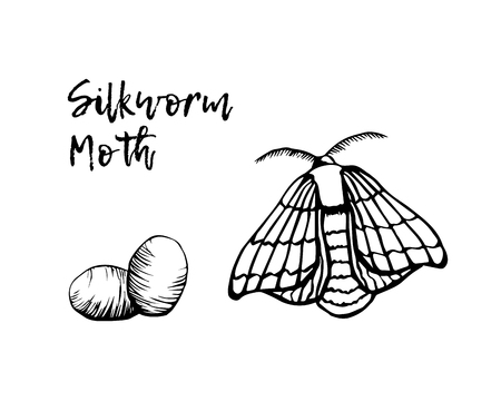Silkworm sketchy illustration vector isolated