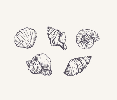 Handdrawn ink seashells set vector isolated sketch