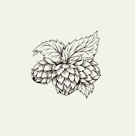 Hop plant ink illustration isolated drawing Ilustrace