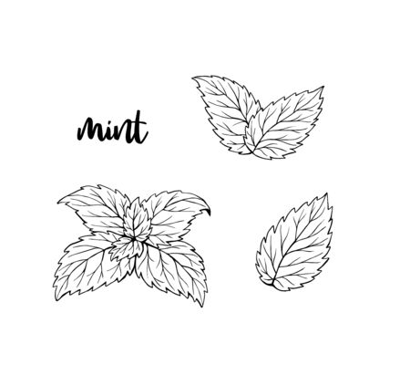 Mint leaves hand drawn illustration isolated ink Ilustrace