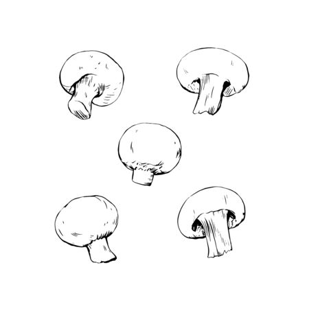 Champignon mushrooms ink drawing isolated sketch