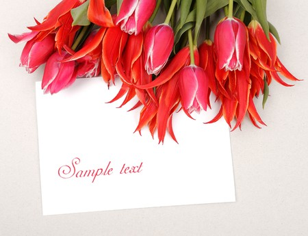 beautiful red tulips with empty blank with place for text Stock Photo - 6911594