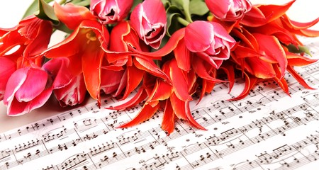 beautiful red tulips with music sheet page Stock Photo - 6991152