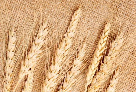 Wheat ears on a textile background photo
