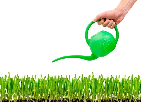 watered: green grass being watered with watering can over white background  Stock Photo