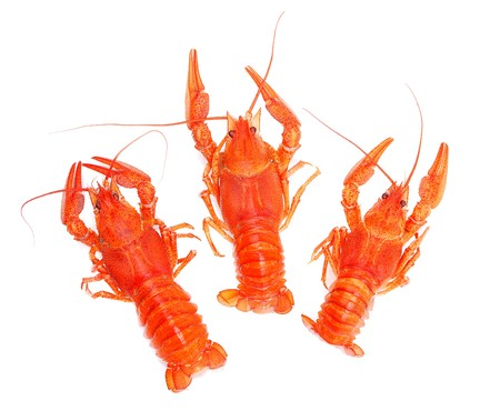 lobsters isolated on white photo