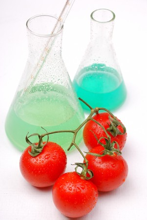 food research: Chemical tomato. GMO food concept.