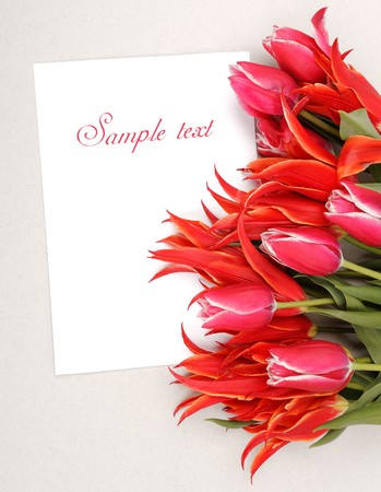 beautiful red tulips with empty blank with place for text Stock Photo - 7281441