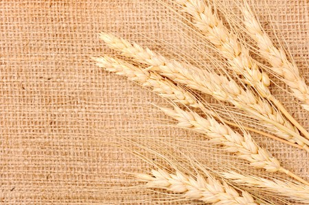 fascicle: Wheat ears on a textile background Stock Photo