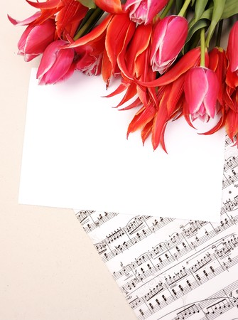 beautiful red tulips with music sheet page and congratulatory blank Stock Photo - 7545995