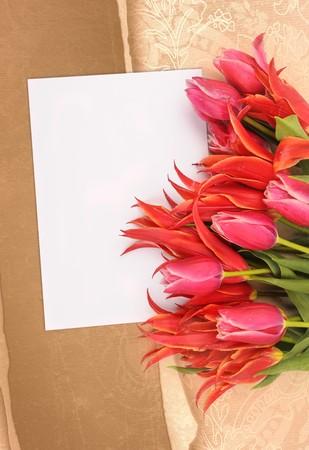 beautiful flowers with congratulatory blank on decorative background Stock Photo - 7856071