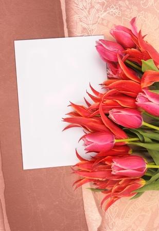 beautiful flowers with congratulatory blank on decorative background Stock Photo - 8618946
