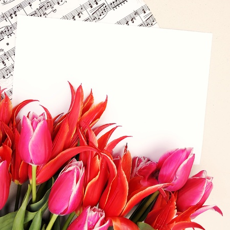 beautiful red tulips with music sheet page and congratulatory blank photo