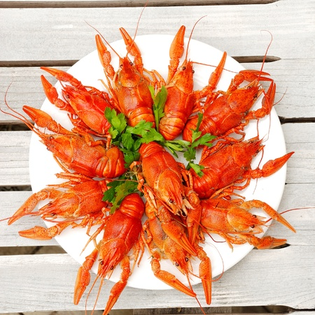 Lobsters on a plate with parsley photo