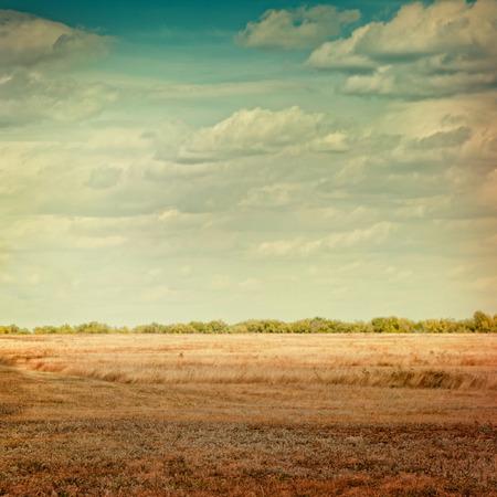 lomography: Autumn wheat field lomography card.