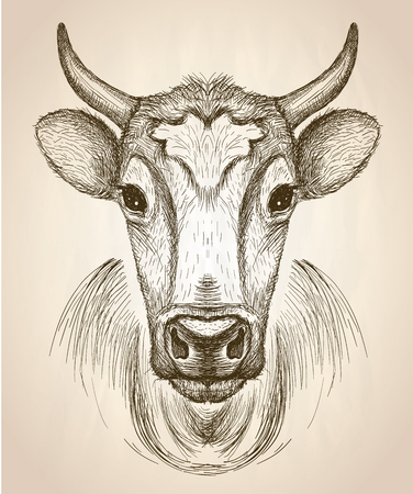 Cow face portrait, front view, vector hand drawn graphic sketch illustration.