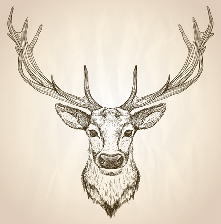 Hand drawn graphic sketch illustration of a deer head with big antlers, front view, vector wildlife poster.