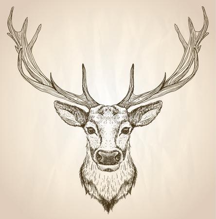 Hand gezeichnete grafische Skizze Illustration einer Hirschkopf mit großen Geweihe, Vorderansicht, Vektor-Tierplakat.