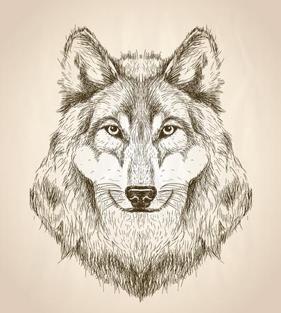 lobo feroz: Vector boceto ilustración de una vista frontal de la cabeza de lobo, diseño blanco y negro de la fauna del vector.