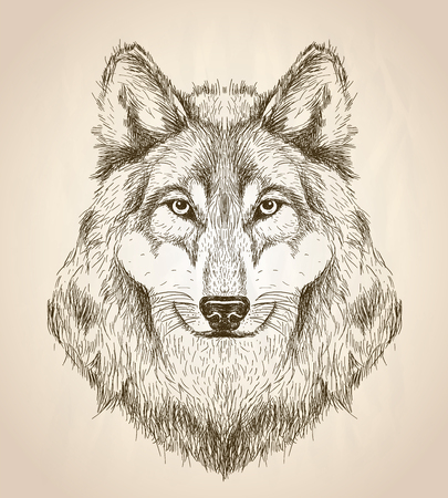 animals in the wild: Vector sketch illustration of a wolf head front view, black and white vector wildlife design. Illustration