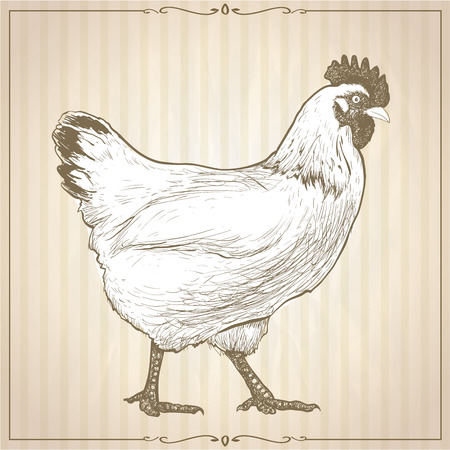 Hand drawn graphic vector illustration with going hen,  profile view, against beige striped backdrop with retro frame, vintage style.