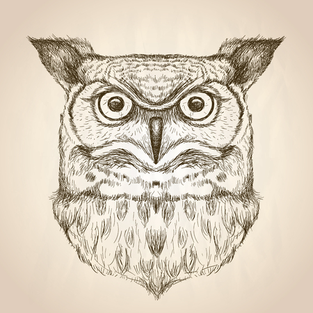 Sketch illustration of an owl head, front view, vector wildlife hand drawn design.